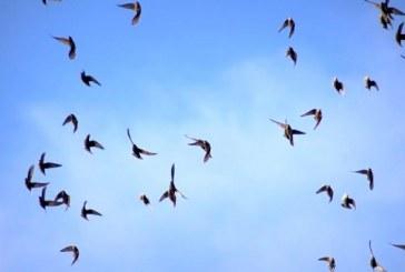 פטנט: מרחיקים ציפורים בעזרת רעש