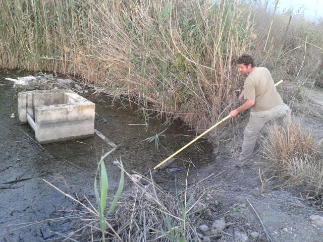 המשרד להגנת הסביבה נאבק ביתושים