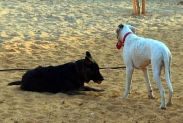 חיפה: דואגים לזכויות הכלבים