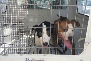 חולצו כלבים שהוחזקו בתנאים קשים