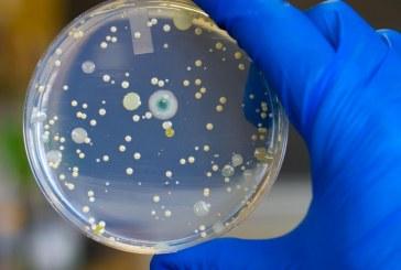 הונדסו בהצלחה חיידקים ליצירת סוכר מפחמן דו-חמצני
