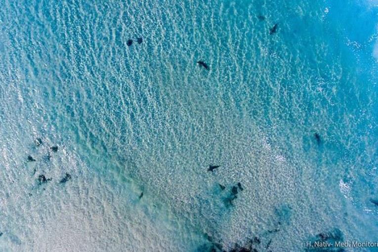 תופעה: להקות כרישים ליד החוף