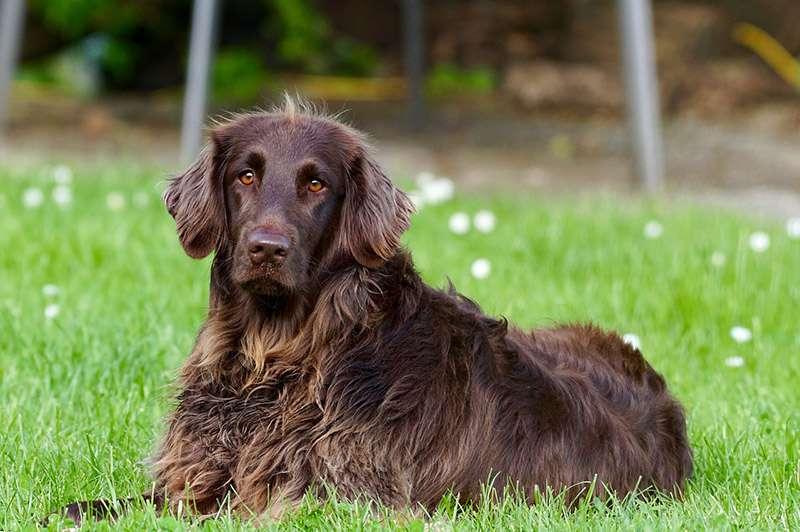 מקרים נוספים של כלבת בגליל המערבי