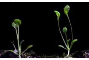 מחקר: גם צמחים יודעים מתי לנוח