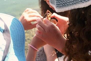 תלמידים ומדריכה הצילו דגים וסרטנים שנתקעו ברשת דיג בחופי הכנרת