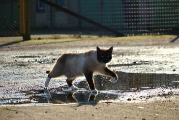 חתול חולץ מבור ניקוז