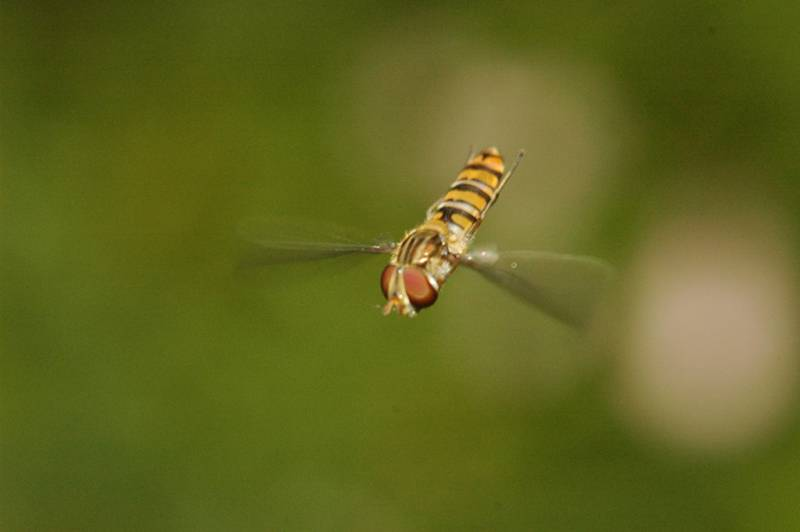 בריטניה: כ-3.5 טריליון חרקים נודדים מדי שנה